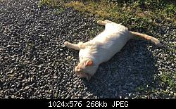 Click image for larger version.  Name:Helper Cat.JPG Views:42 Size:268.1 KB ID:15751